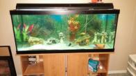 Cichlids and Aquarium/stand, oakville